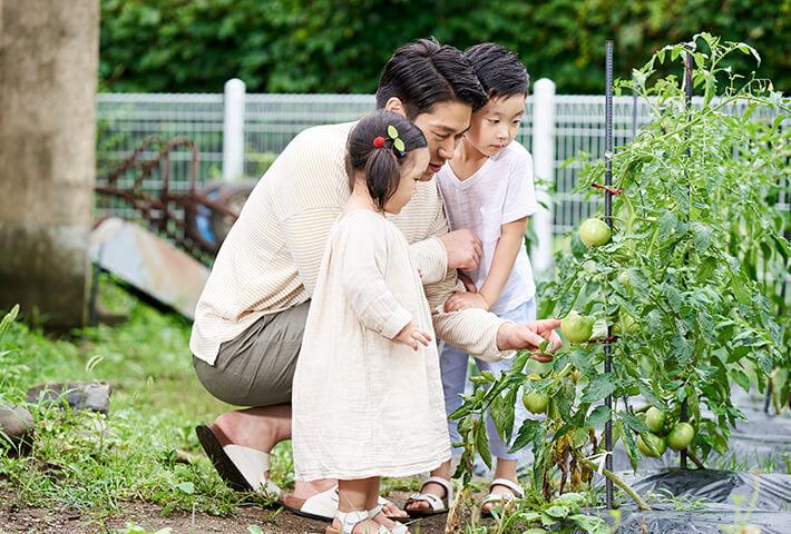 広めの庭で家庭菜園も